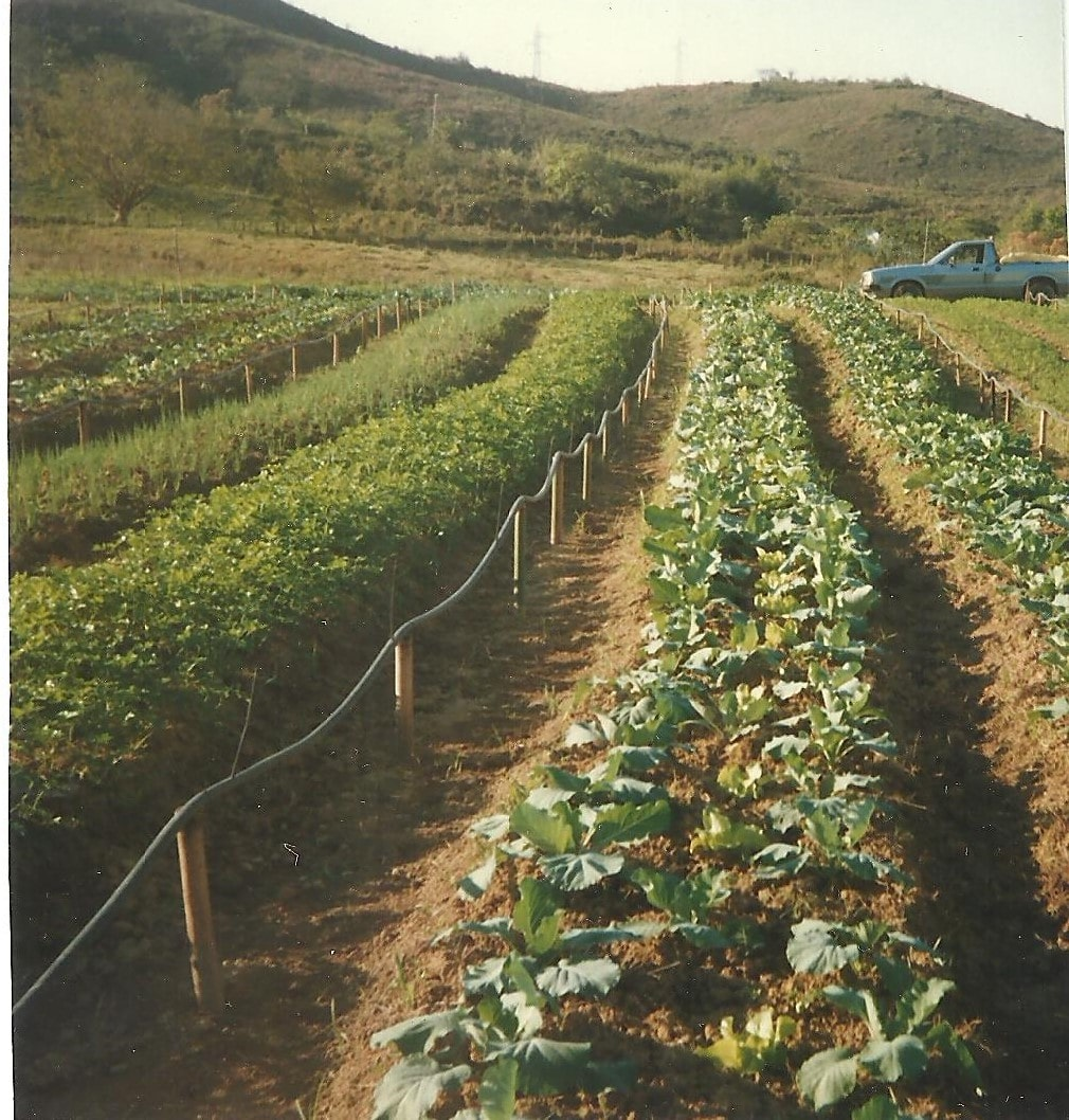 Plantação na década de 90